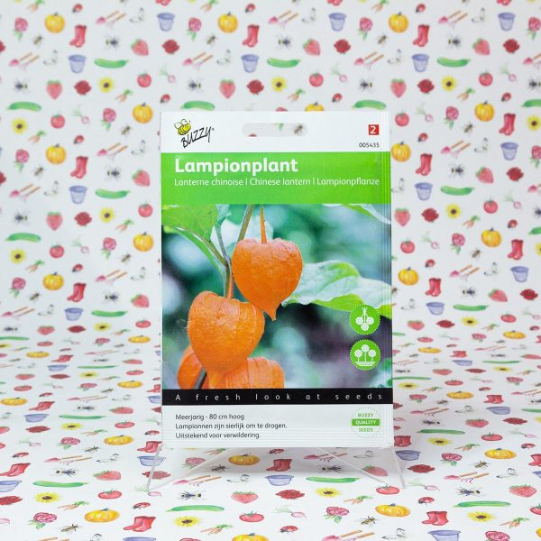 Buzzy® Physalis, Lampionplant