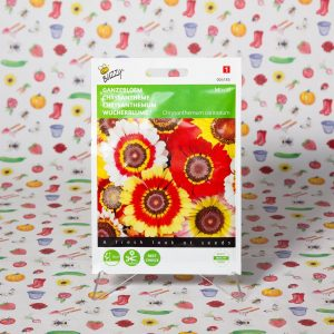 Buzzy Chrysanthemum, Ganzebloem gemengd